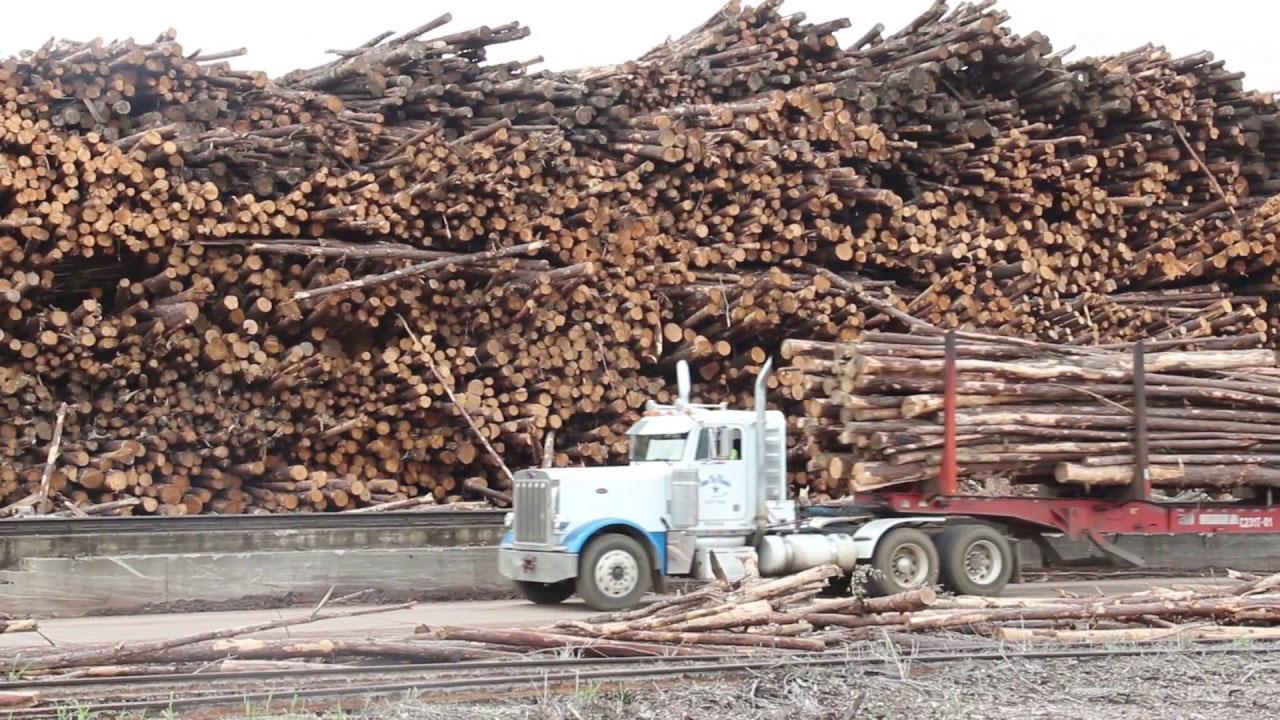 Arkansas Timber