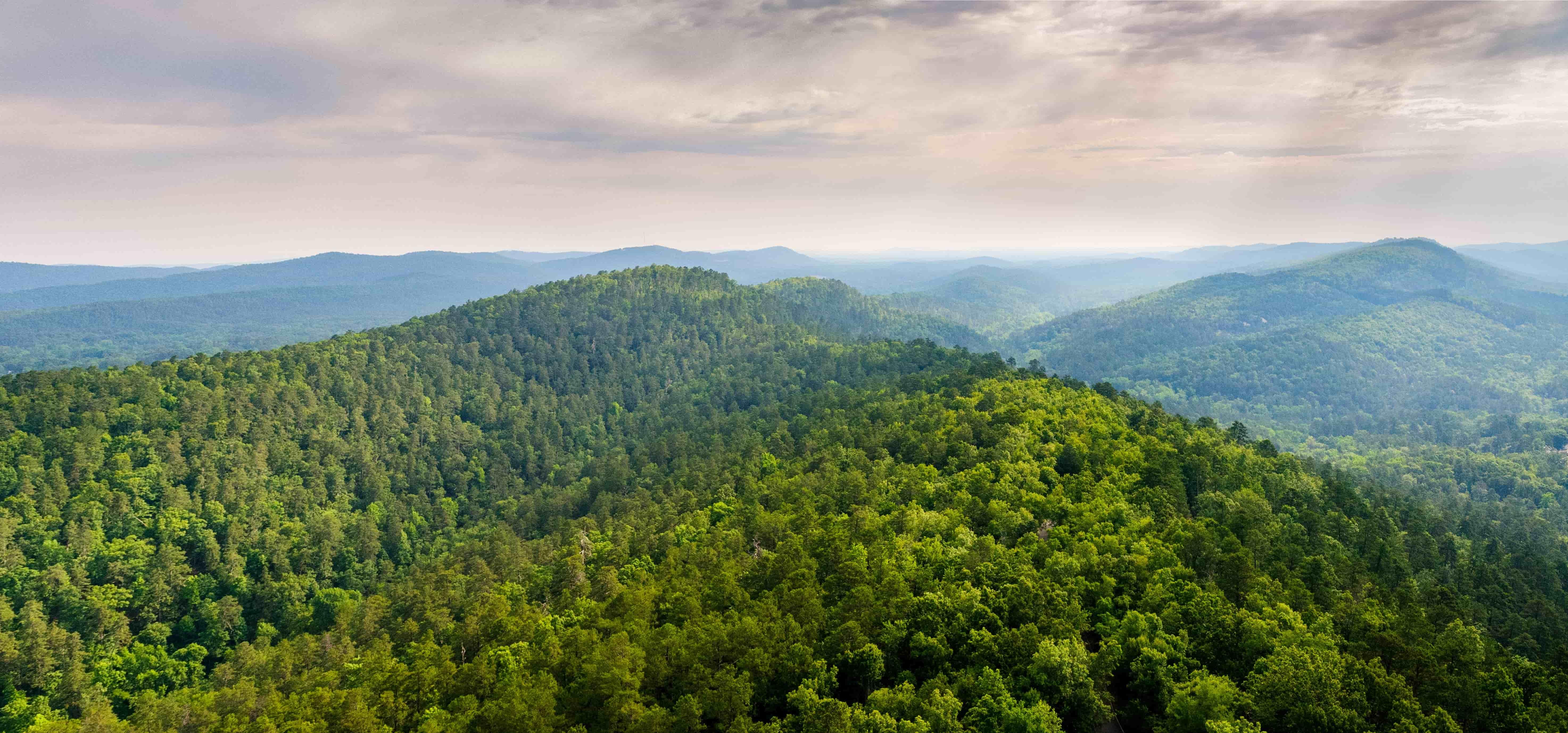 arkansas-forest